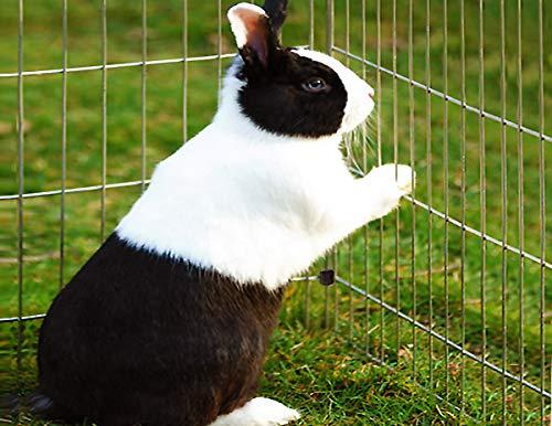 Kaninchenstall, Deuba, einstöckig, Freilaufgehege inkl. Sonnenschutz - 7