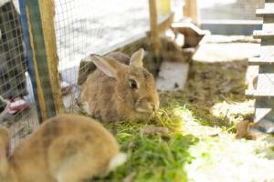 Kaninchen in ihrem neuen Kaninchenstall