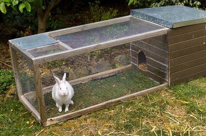 Kaninchengehege draußen mit Hase